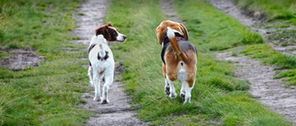 A Tail of Two Dogs Part 1
