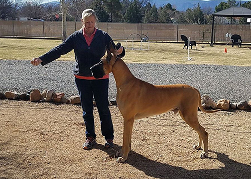 Testimonials Unleashed Dog Training AZ