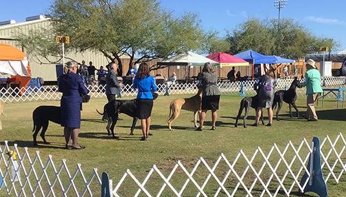 Testimonials Unleashed Dog Training AZ