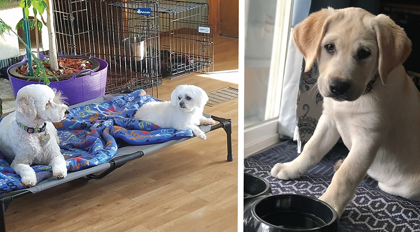 Stages of Dog Training: Puppy