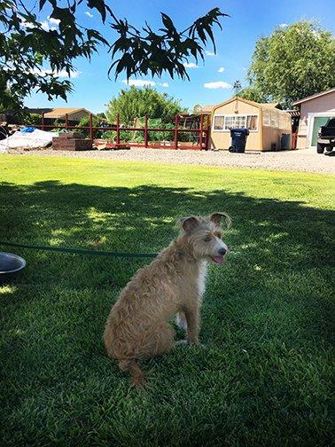 Dog Training Road Trip
